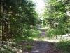 Deer Pond Mtn Bike Loop, Tupper Lake